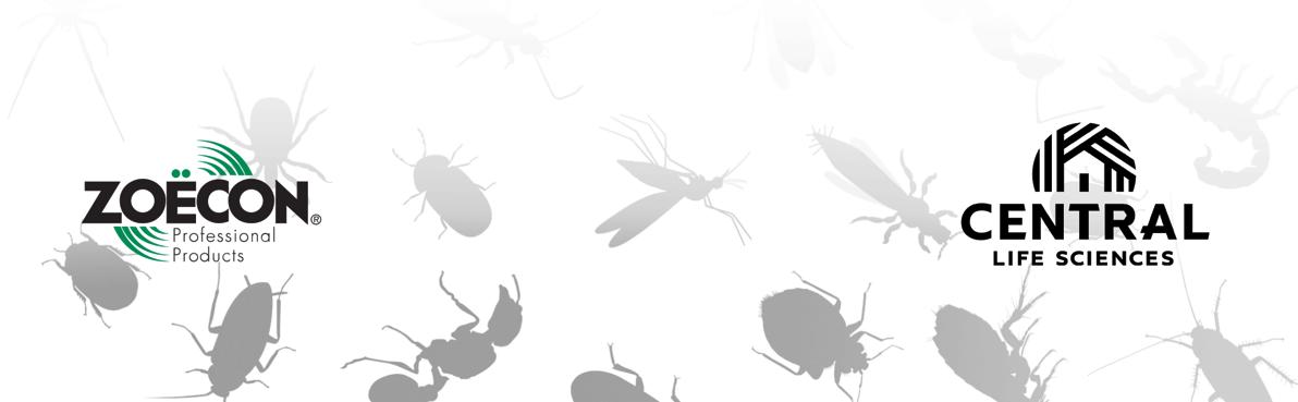 BugHeader_New-1
